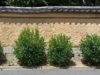 180520萩の寺の土塀(練塀)