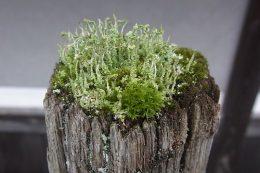 180523奈良県桜井市初瀬 駒寄の上の小宇宙 苔